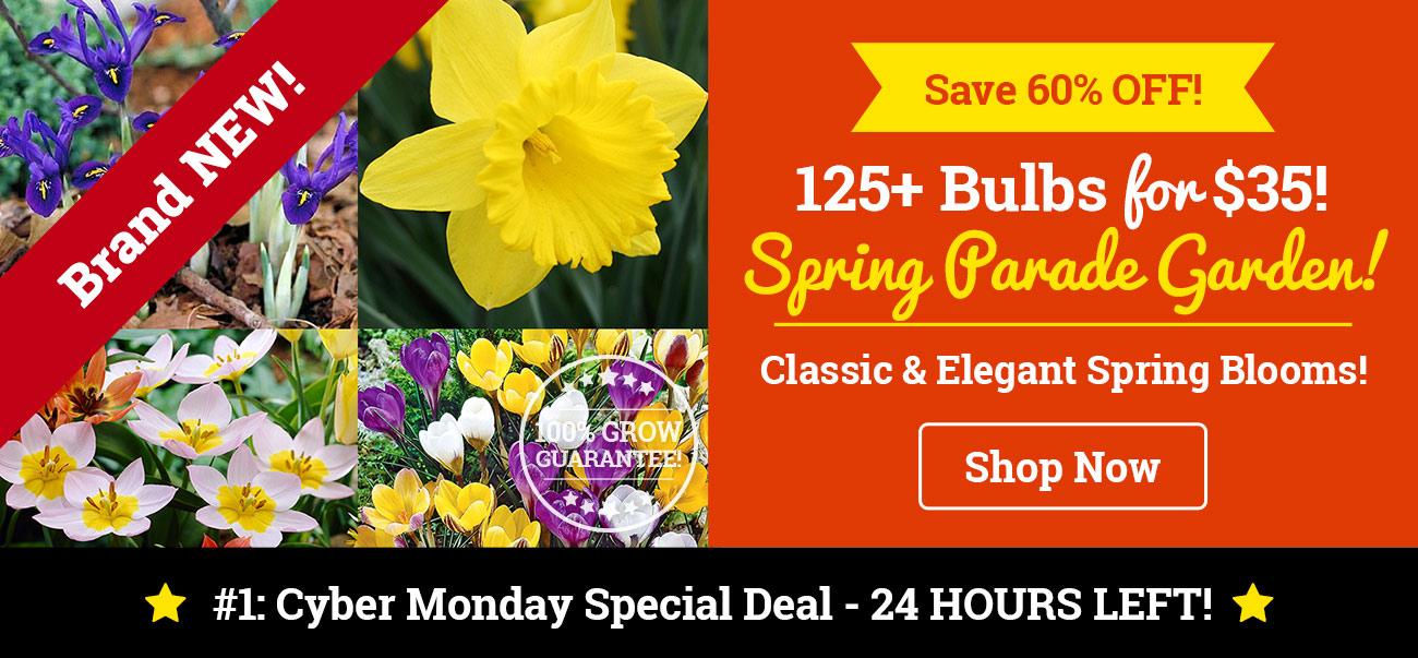 125+ Bulbs for $35!