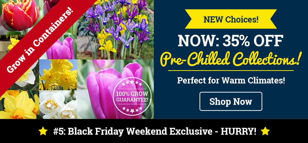 35% OFF Pre-Chilled Bulb Collections!